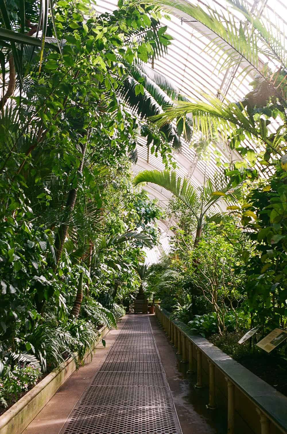 35mm film kew gardens vlog
